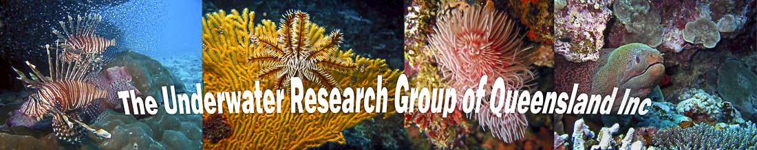 The Underwater Research Group of Queensland